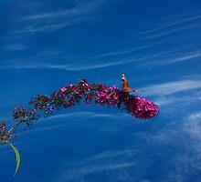 Bumblebee vs Butterfly by jennyless
