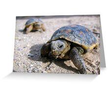 Desert Tortoises ~ Hatchlings (4-5 weeks) Greeting Card
