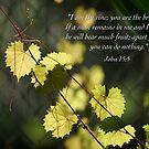 The Vine by JpPhotos