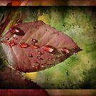 Red Leaf by Rozalia Toth