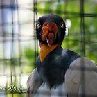 Vulture Shock by JpPhotos