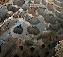 feather patterns by Skye Hohmann