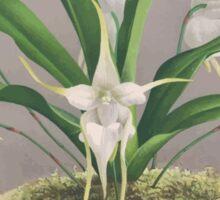 Iconagraphy of Orchids Iconographie des Orchidées Jean Jules Linden V3 1887 0062 Sticker