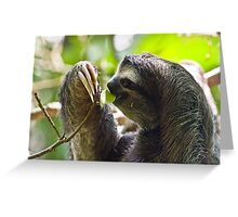 Young Sloth Greeting Card