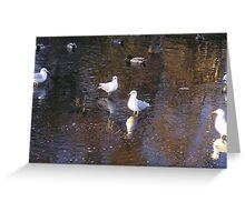 Birds of a Feather-Huntington Beach Central Park,CA Greeting Card
