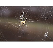 A Garden Spider and Web Photographic Print