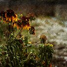 Last Plant Standing by MClementReilly