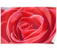 Macro of a red rose Poster