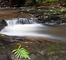 Rainforest Solitude by Jason Asher