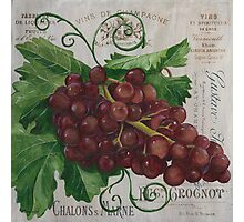 French Wine Red Grapes Photographic Print