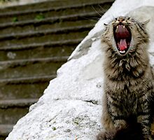 The Cat of Sultanahmet by Helena Bolle