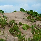 Sand Dunes - Inskip Point near Fraser Island Qld by Beth  Wode