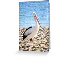 Pelican at Monkey Mia W.A. Greeting Card