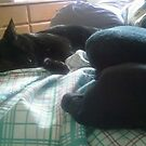 unemployed by catnip addict manor