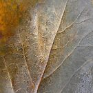 Golden leaf by Lena Weiss