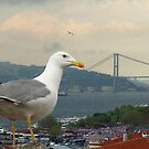 Seagull and Bosphorus Bridge, Istanbul by Zoe Marlowe