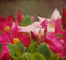 All The Pretty Flowers... by Carol Knudsen