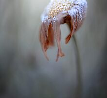Sugar coated by Mandy Disher