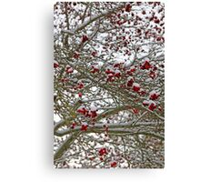 Snow covered tree full of red berries Canvas Print