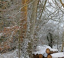 Winter wonderland in England by Chris L Smith