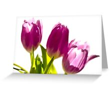 Tulips In The Morning Light - Digital Oil Greeting Card