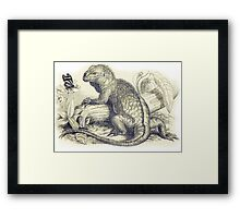 Iguana Vintage illustration Framed Print