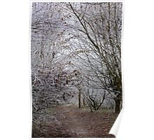Forest trees blanketed with fog and frost  Poster
