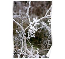 Forest tree branches blanketed with frost  Poster