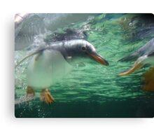 Mr Penguin Canvas Print