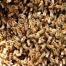 Bees by D R Moore