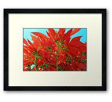 Euphorbia Pulcherrima: The Magnificent Poinsettia Plant Framed Print