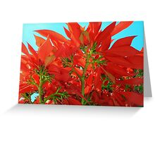 Euphorbia Pulcherrima: The Magnificent Poinsettia Plant Greeting Card
