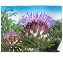 Flower buds of the globe artichoke Poster