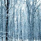 Trees Pattern by Svetlana Sewell