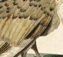 Cute Barn Owl Vintage Illustration Sticker