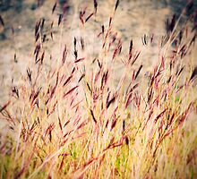 Tall grass by Silvia Ganora