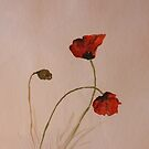 red Poppies by Birgit Schnapp