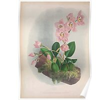 Iconagraphy of Orchids Iconographie des Orchidées Jean Jules Linden V4 1888 0122 Poster