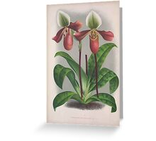 Iconagraphy of Orchids Iconographie des Orchidées Jean Jules Linden V4 1888 0070 Greeting Card