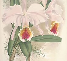 Iconagraphy of Orchids Iconographie des Orchidées Jean Jules Linden V12 V13 1897 0050 by wetdryvac
