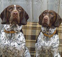 Terry & Ricky --- My Hunting Dogs by Edwin  Catania