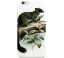 Funky Cameroon Scaly-tail iPhone Case/Skin