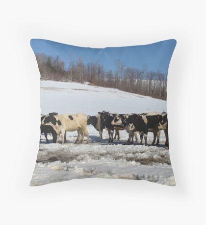 Cold Cows Throw Pillow
