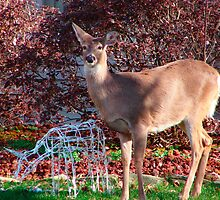 Will the Real Deer Please Stand Up by vigor