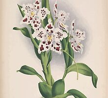 Iconagraphy of Orchids Iconographie des Orchidées Jean Jules Linden V15 1899 0102 by wetdryvac
