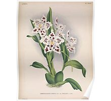 Iconagraphy of Orchids Iconographie des Orchidées Jean Jules Linden V15 1899 0102 Poster