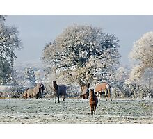 Cheshire Countryside : More Snow to come Photographic Print