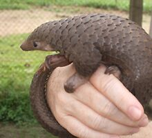 Super Cameroon Scaly-tail by cute-wildlife