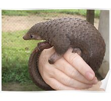 Super Cameroon Scaly-tail Poster
