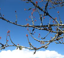 Blooms reaching for the sky by Rainydayphotos